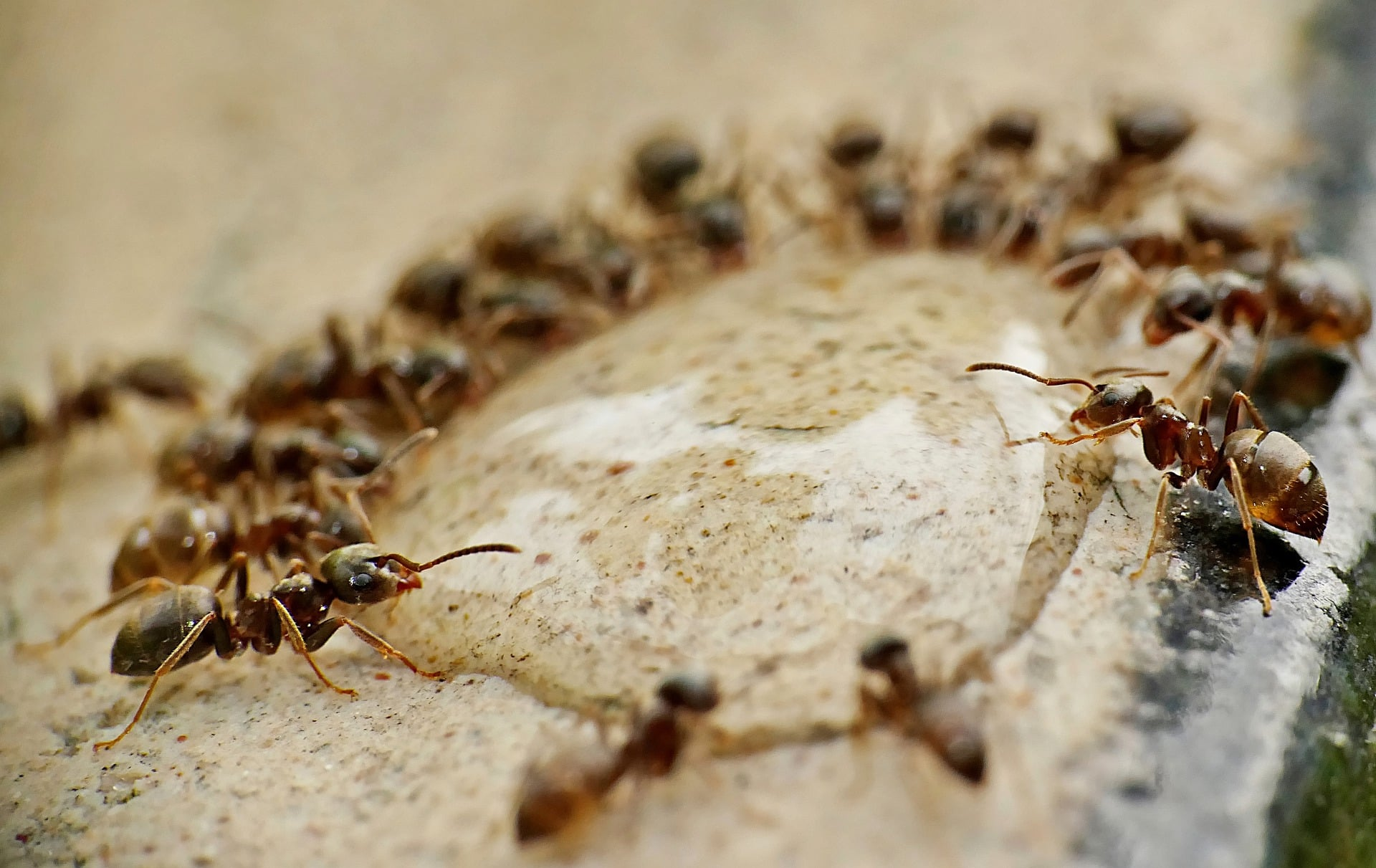 How to Kill Ants with Borax [Easy DIY Guide] – Bug Lord