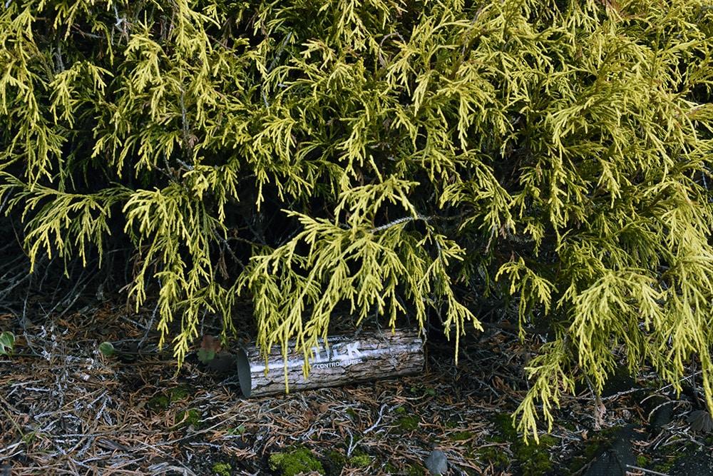 tick tube bush