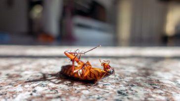 best cockroach baits