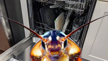 cockroaches in dishwasher