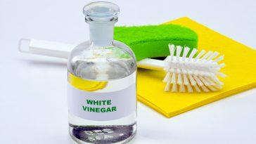 does white vinegar kill bed bugs
