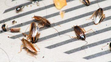 best roach trap