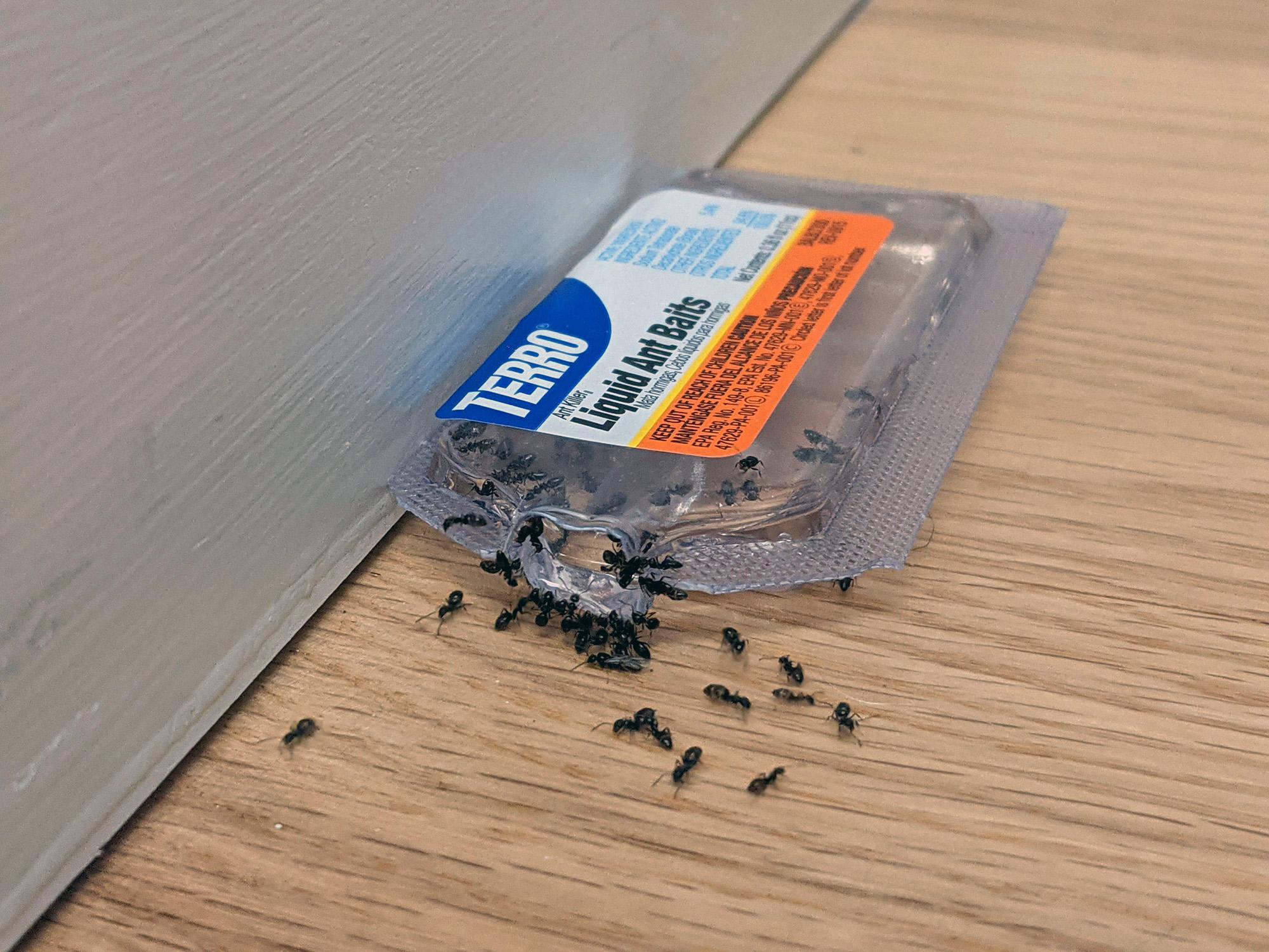 ants eating bait