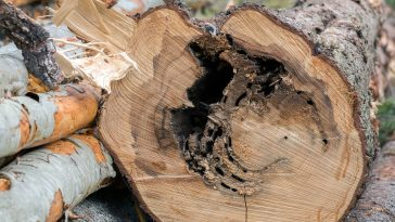 get rid of carpenter ants in tree